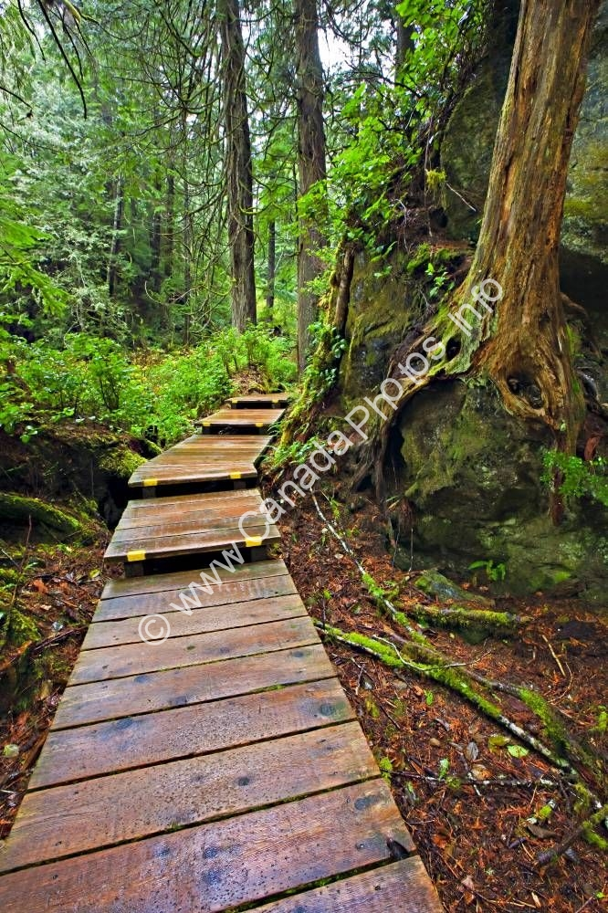 Photo Boardwalk Rainforest Maquinna Marine Provincial Park