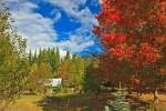 Red fall colors on trees in Central Kootenay in British Columbia.