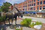 Saint John is the largest City of New Brunswick, this beautiful moose statue can be found in downtown Saint John.