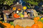 Beautiful display in Keremeos, Okanagan shows a old vintage car decorated with squashes and fresh harvested pumpkins.