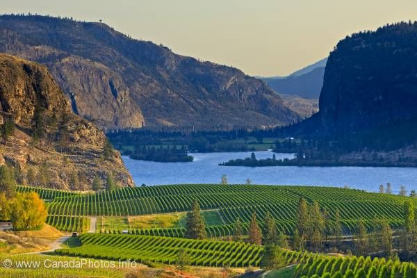 photo of Scenic Iconic Okanagan Blue Mountain Vineyard