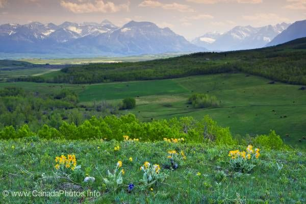 photo of Mountains meet the prairies Alberta