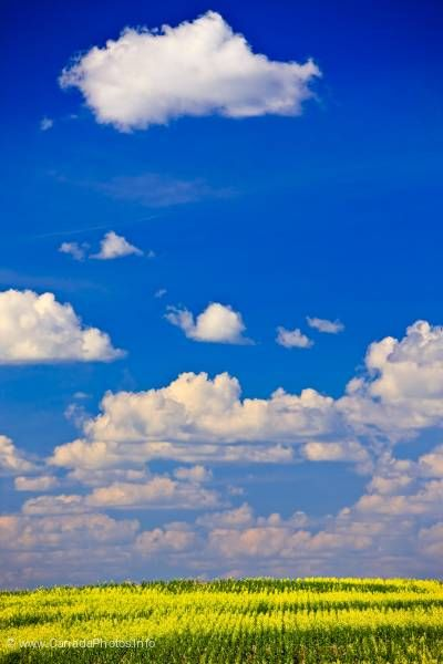 photo of Endless prairie puffy clouds Saskatchewan