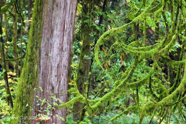 photo of Moss Rain Forest