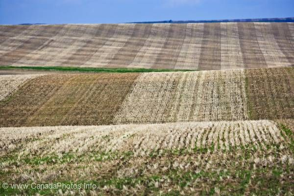 photo of Brown Cut Wheat Field Prairie Alberta